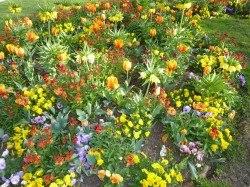 Fleurs_Aulnay_1