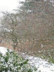 neige aulnay
